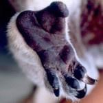 Животные способны к состраданию